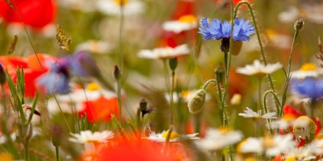 WILDLIFE WATCH - WILDFLOWER WONDERS tickets
