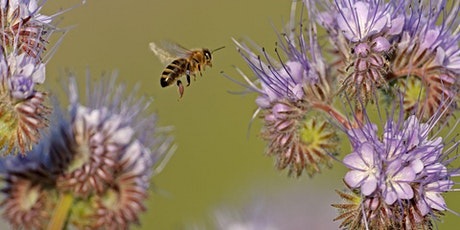 WILDLIFE WATCH - ALL ABOUT BEES tickets