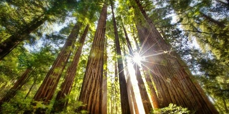 Reiki in the Redwoods ~ Level 1 Training tickets