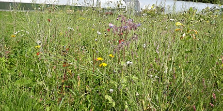 Wildflower meadow planting tickets