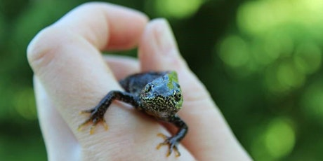 Guided Walk: Newts of Calderwood tickets
