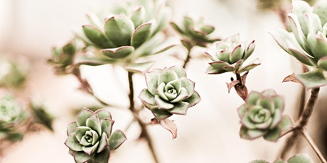 DIY Workshop - Farm Flowers and Succulents! tickets