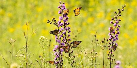 Pollinator Garden Tours Summer-Fall 2020 tickets
