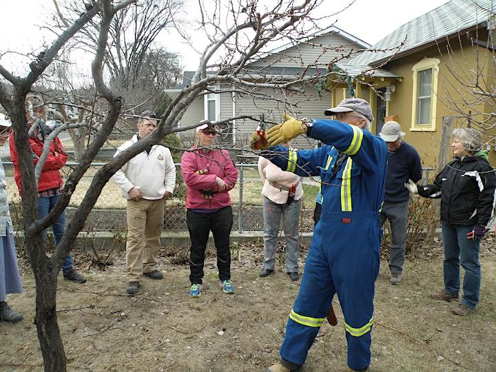 Fruit Tree Pruning and Espalier Workshop image