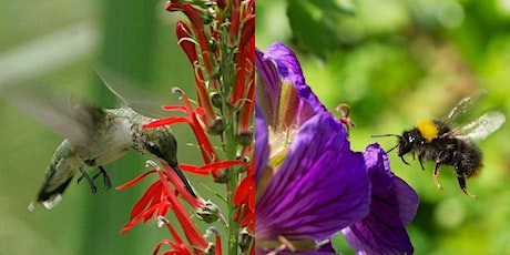 Guided 'The Birds & The Bees' Walks with NYC Audubon & The Honeybee Conservancy tickets