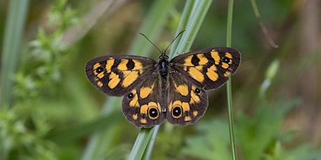 Butterflies Australia Melbourne Workshop tickets