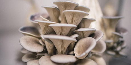 The Shroomshop: Mushroom Cultivation for Beginners #3 tickets