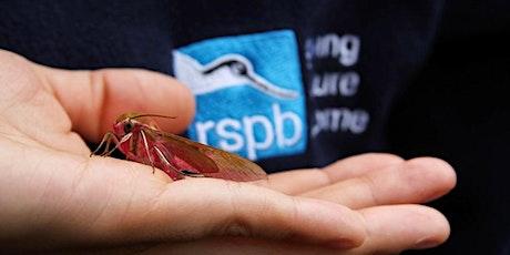 Marvellous Moths at RSPB Strumpshaw Fen tickets