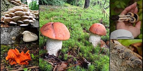 Initiation à l'identification de champignons sauvages billets