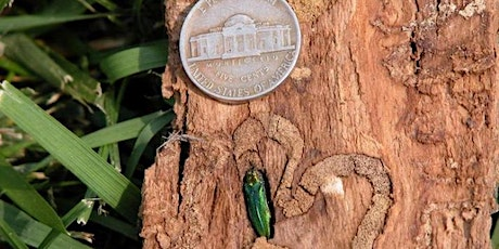 Urban Forest Pest Readiness - Olympia tickets