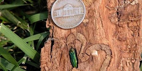 Urban Forest Pest Readiness - Spokane tickets