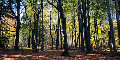 Forest Bathing & Natural Mindfulness  tickets