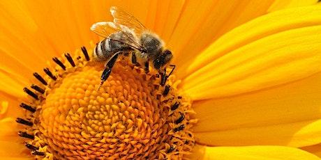 Atelier bricolage : si nous aidions les abeilles billets