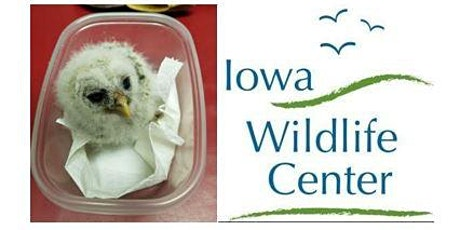 Is it Really a Wild Call for Help? - Iowa Wildlife Center tickets