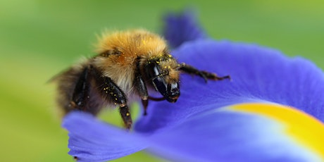 A beginners' guide to bees, wasps and ants in your garden (EWC 2806) tickets