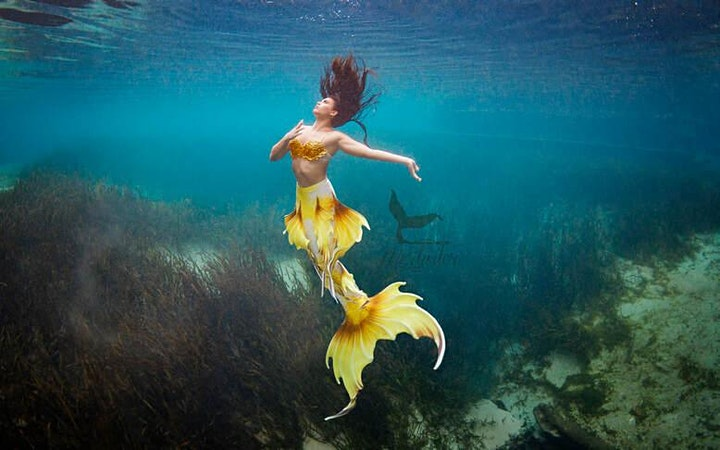 CANCELLED/2021 Mermaids & Margaritas Experience image