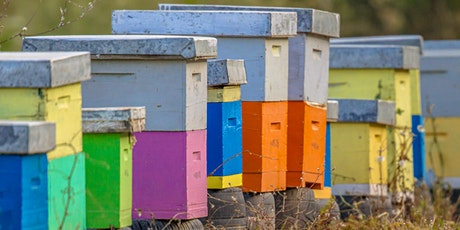 June - Introduction to Beekeeping Class at The Bee Store tickets