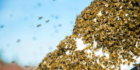 August - Beginning Beekeeping Class at The Bee Store - Inspections tickets