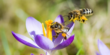 October - Introduction to Beekeeping Class at The Bee Store tickets