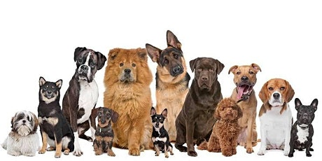 Therapy Dog Assessment and Basic Handler Training MURWILLUMBAH tickets