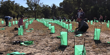 Community Planting Day - Henley Reserve tickets