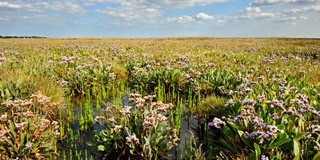 Nature Course: Saltmarsh Discovery tickets