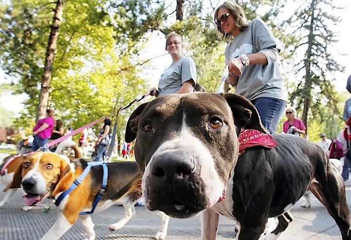 Great Iowa Summer Pet Fest - July 11 & 12, 2020 image