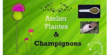 Atelier de formation sur les plantes et les champignons sauvages billets