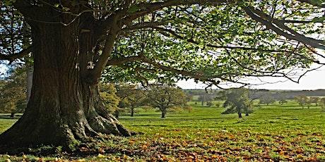 Coleshill parkland restoration walk tickets