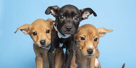 Lend A Paw Volunteering tickets
