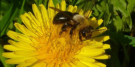 Vanish Nature Series: Brews for Bees - The Super Pollinators That Run the World tickets