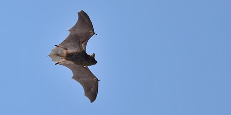 Remote Acoustic Survey of Bats in Millersville tickets