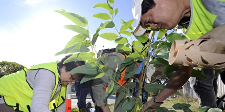 Community Tree Planting - Yokine tickets