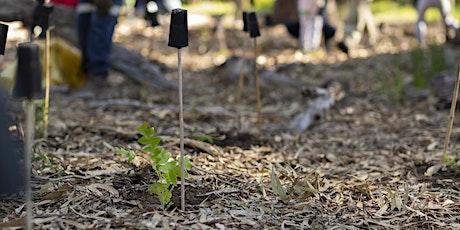 Community Tree Planting - Wembley Downs tickets
