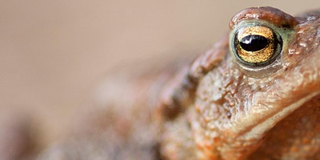 Nature Course: Discovering Toads tickets