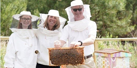 Bee Downtown Hive Tour @ Frontier RTP tickets