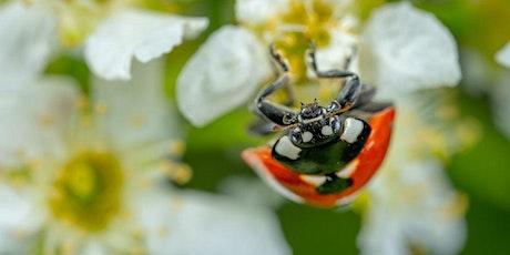 Presentatie Nederlandse Actieagenda voor biodiversiteit [Voorlopig ticket] tickets
