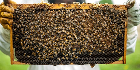 Members Week: Urban Beekeeping at Mount Auburn tickets