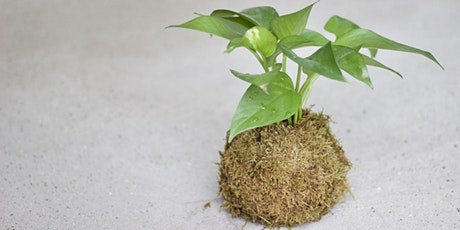 Mother's Day Workshop \ Kokedama tickets