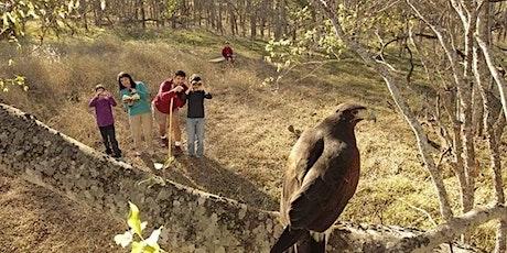 Free Family Birding 101 tickets