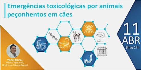 Emergências toxicológicas e por animais peçonhentos em cães ingressos