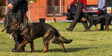 Obedience/Protection Dog Training Signup tickets