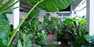 Brisbane - Huge Indoor Plant Sale - Virtual Pop-up shop