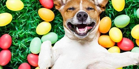 CANCELLED !!!   Get Your Paws On - Easter Egg Hunt for Dogs tickets