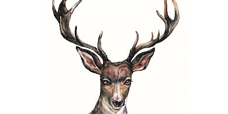 Deer - Brunchbox tickets