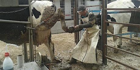 CORSO ON-LINE - Segnali dalla vacca Expert con elementi di patologie podali biglietti