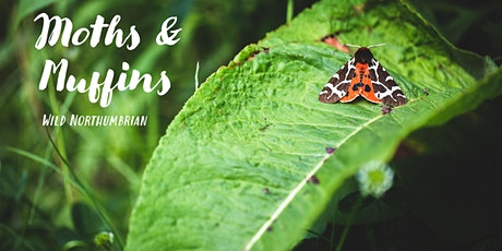 Moths & Muffins Morning | Wild Northumbrian tickets