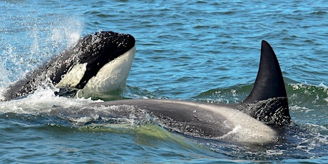 The Secret Lives of Killer Whales: A Killer Whale Tales science activity tickets