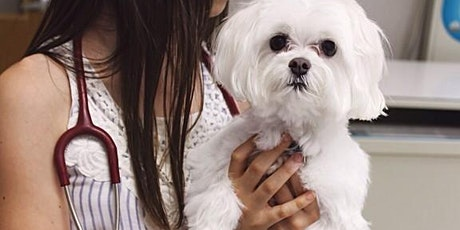 Online Pet Parenting Series: Pet Health with Downtown Vet Dr. Jessica Lee tickets