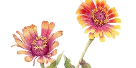 Sun- Flowers and Summer Flowers in Colored Pencil tickets